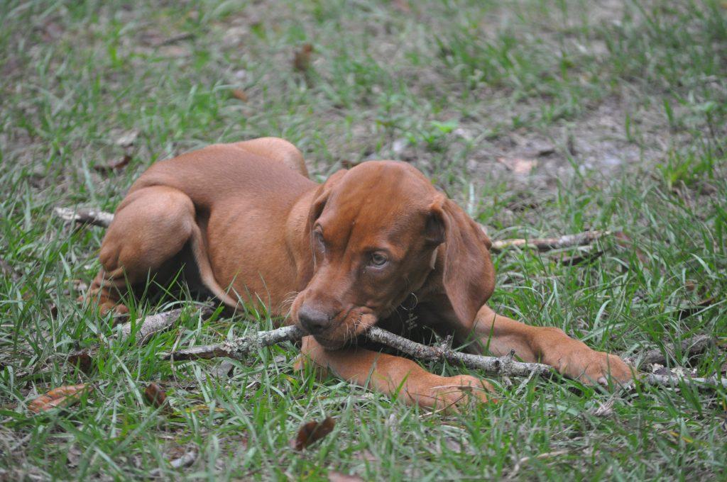 Tiller with a stick